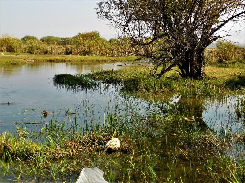 Primavera en las colinas de Chimgan fotografía de archivo libre de regalías