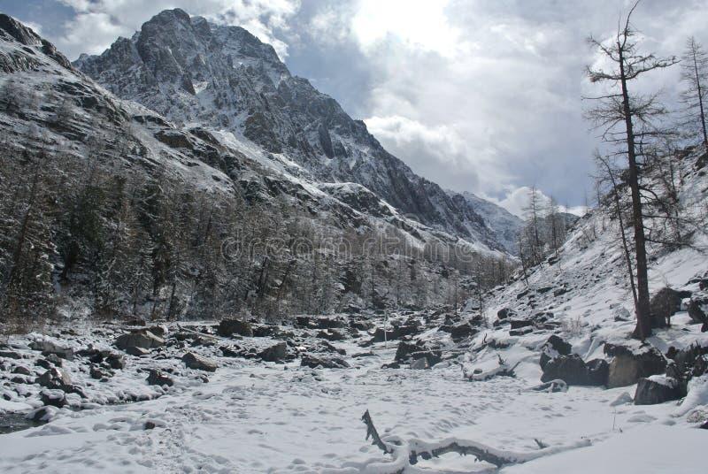 Primavera en las montañas de Altai foto de archivo