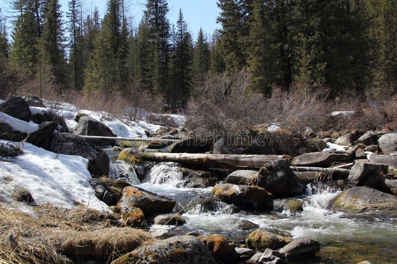 Primavera en las montañas de Sayan occidentales El río Stoktysh foto de archivo