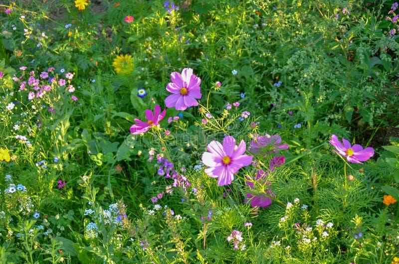 Primavera en mi jardín con las flores coloridas fotografía de archivo libre de regalías