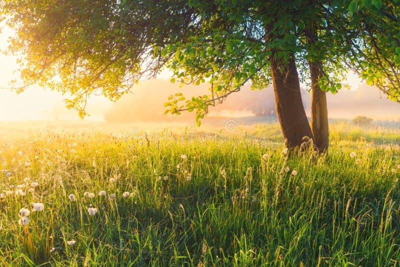 Primavera en parque foto de archivo libre de regalías