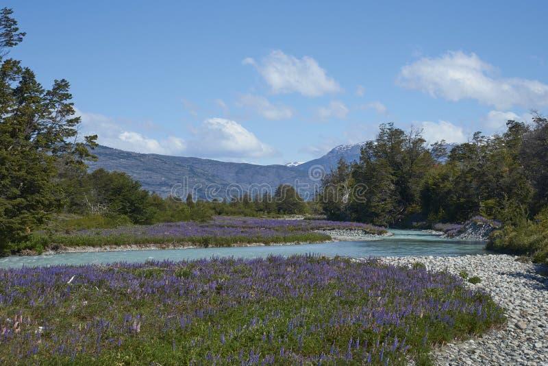 Primavera en Patagonia a lo largo del Carretera austral fotos de archivo libres de regalías