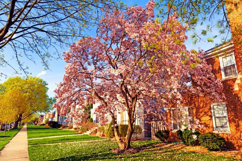 Primavera en suburbios fotos de archivo