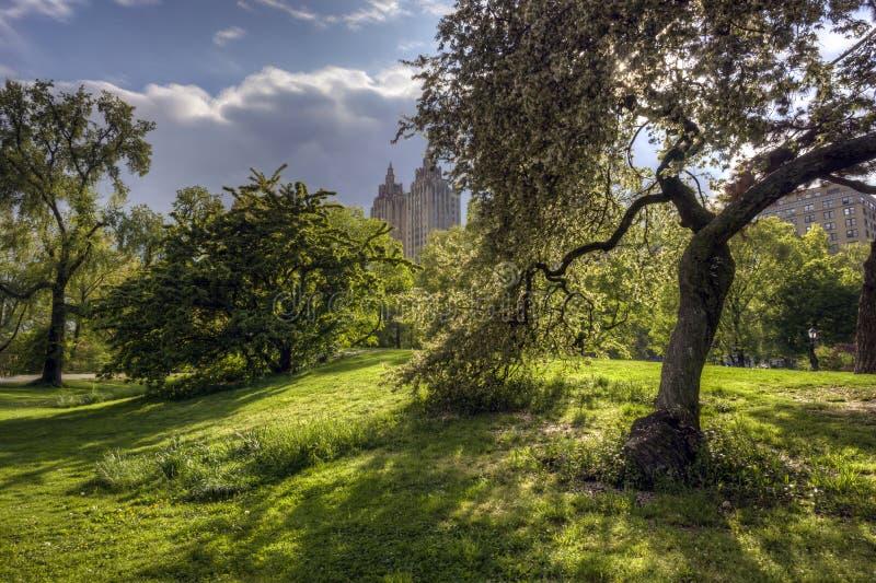 Primavera en sunliught del Central Park a través de los árboles fotos de archivo libres de regalías