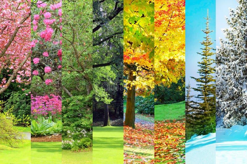 Primavera, estate, caduta, collage di inverno immagine stock