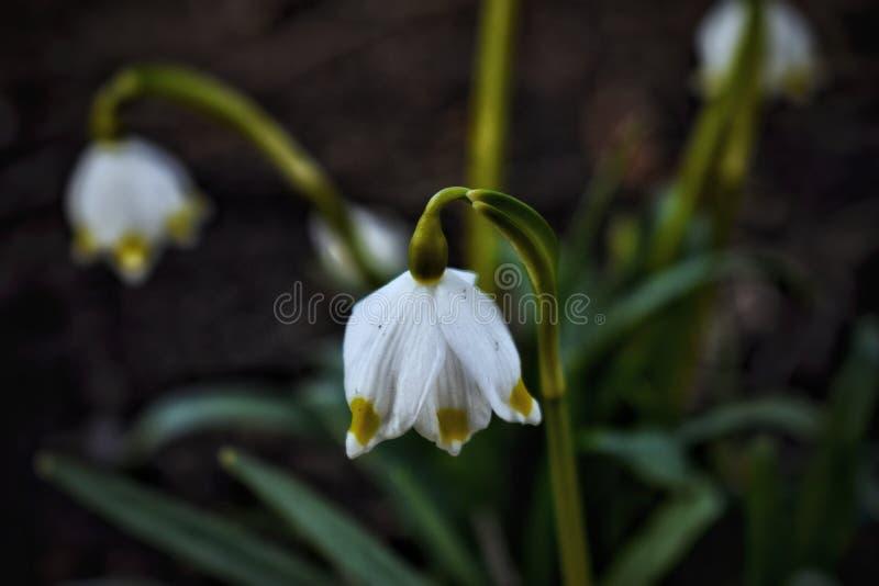 Primavera estone immagini stock libere da diritti