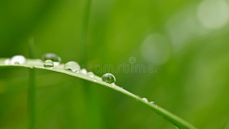 Primavera Fondo natural hermoso de la hierba verde con descensos del roc?o y del agua Concepto estacional - ma?ana en naturaleza fotografía de archivo