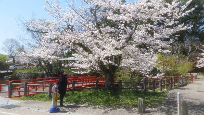 Primavera Giappone fotografie stock libere da diritti