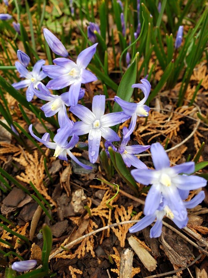 primavera fotos de stock royalty free