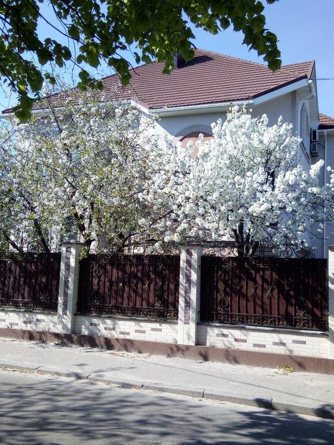 Primavera in Kyev immagini stock libere da diritti