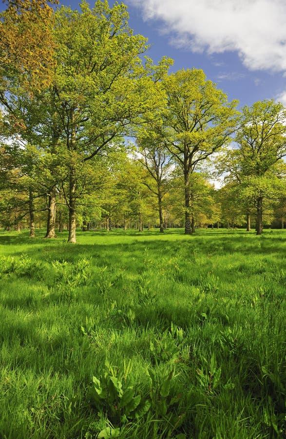 Primavera, madeira de Langdale, Malvern foto de stock