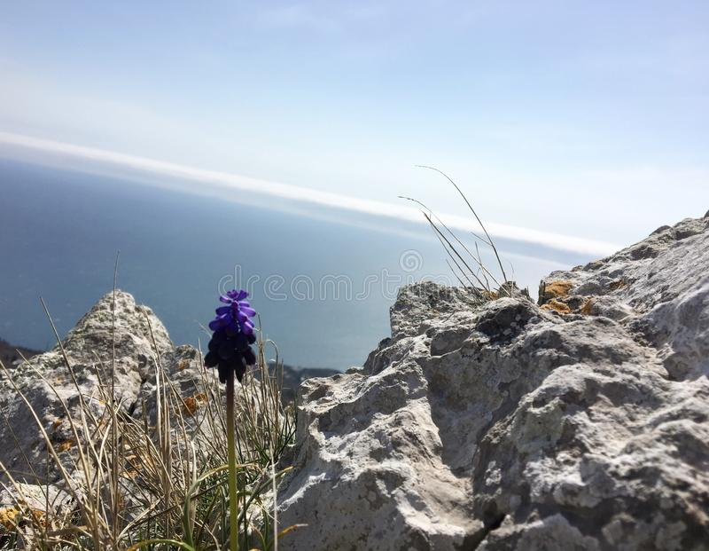 Primavera in montagne della Crimea fotografie stock