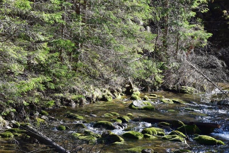 Primavera in montagne di Tatra immagine stock libera da diritti