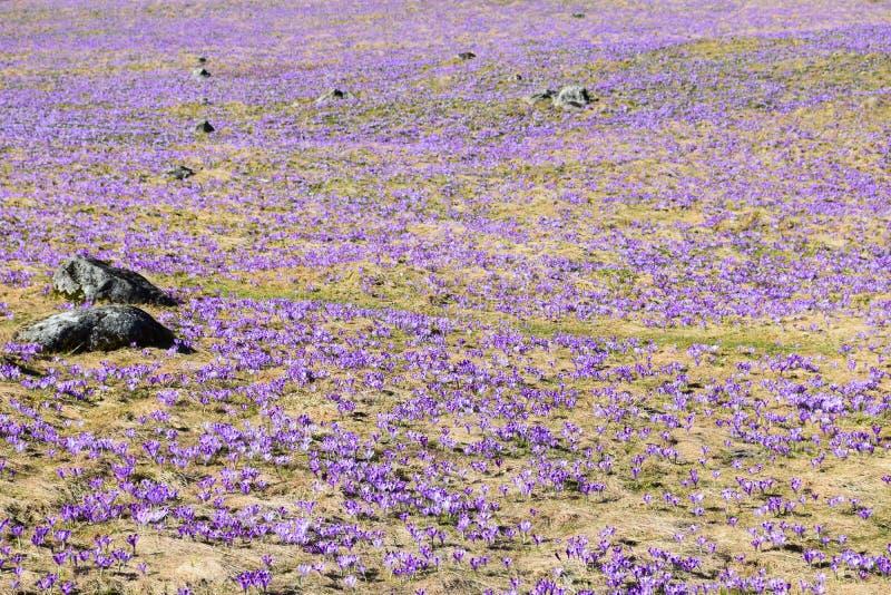 Primavera in montagne di Tatra immagini stock libere da diritti