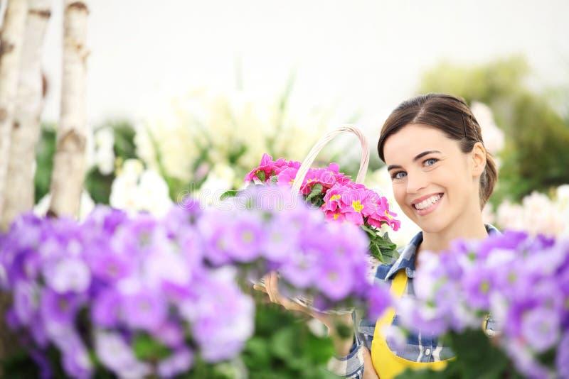 primavera, mulher que sorri com as flores de cesta de vime brancas imagens de stock