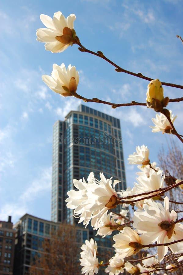 Primavera na cidade fotos de stock royalty free