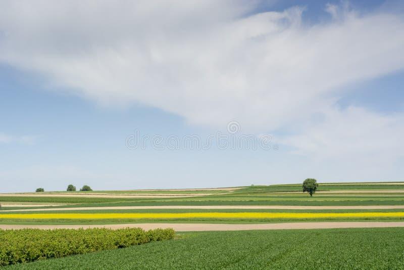 primavera na região de Roztocze no Polônia com flores da colza foto de stock
