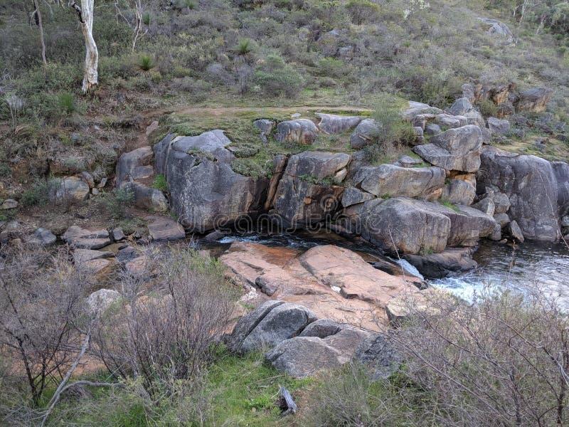 Primavera natural en bushland fotografía de archivo