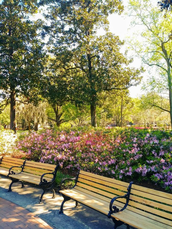 Primavera nel parco immagine stock libera da diritti
