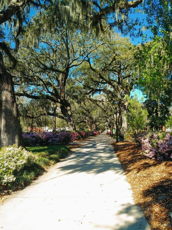 Primavera nel parco fotografie stock
