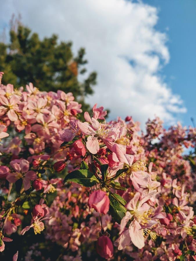 Primavera nell'aria immagine stock
