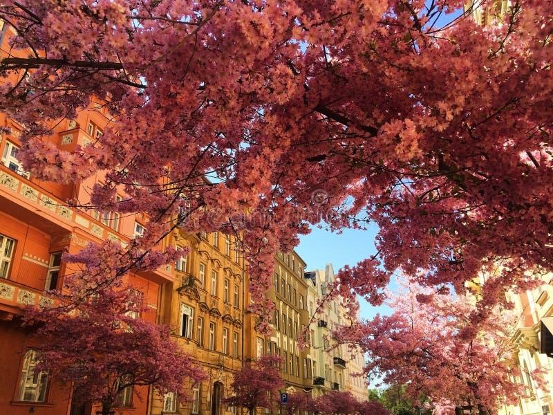 Primavera nella città di Praga fotografia stock