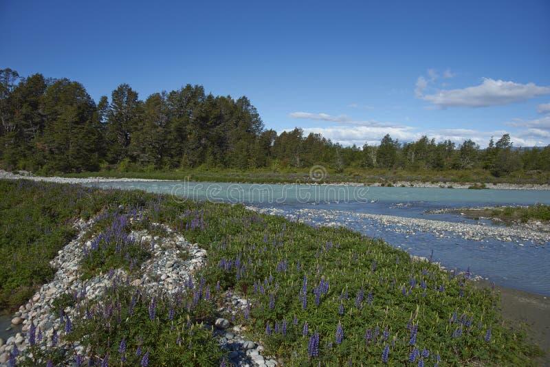 Primavera nella Patagonia, Cile fotografia stock libera da diritti