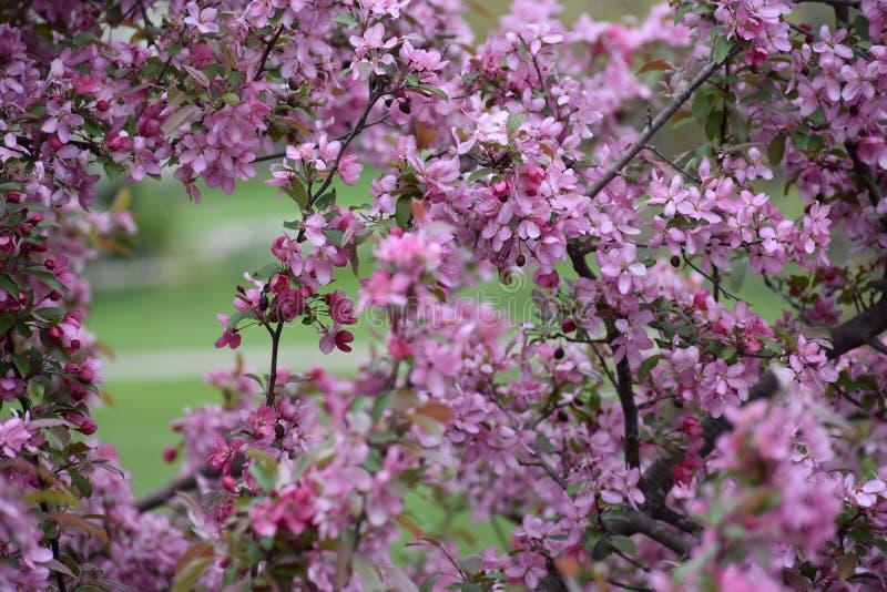 Primavera nello Iowa immagine stock libera da diritti