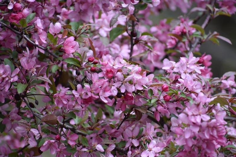 Primavera nello Iowa fotografia stock