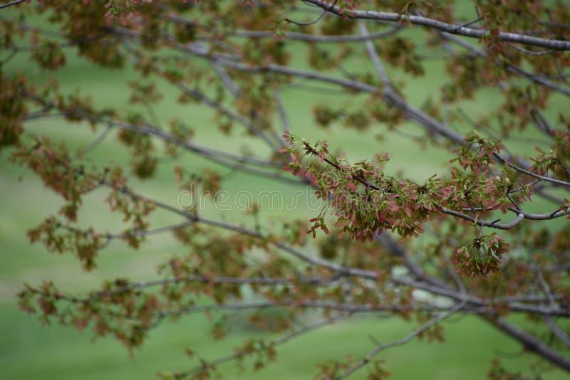 Primavera nello Iowa fotografia stock libera da diritti