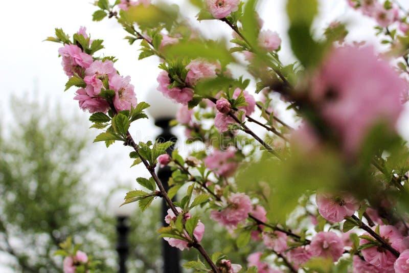 primavera no parque imagem de stock