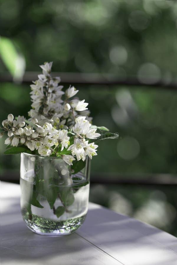 Primavera o flor del verano en un tarro de cristal en el backg verde del jardín foto de archivo libre de regalías