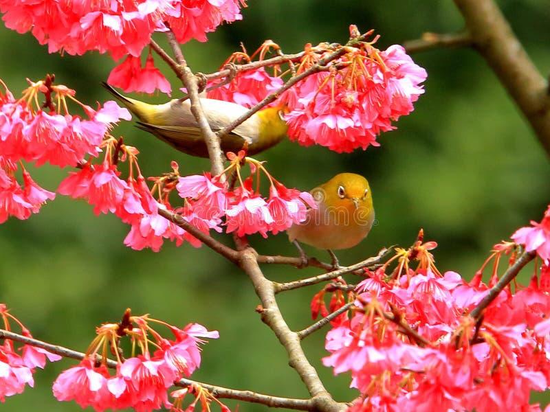 Primavera, pájaros y flores, y flores de plata verde oscuro de los ojos imagen de archivo libre de regalías