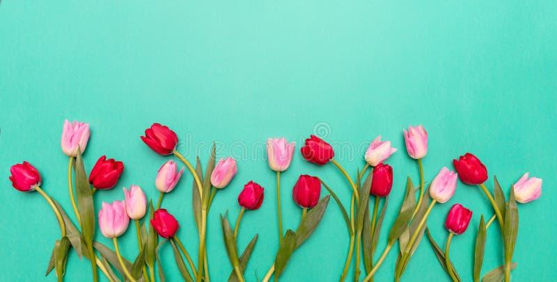 Primavera, pasqua Rosa e tulipani rossi su fondo verde, vista superiore, spazio della copia immagine stock libera da diritti