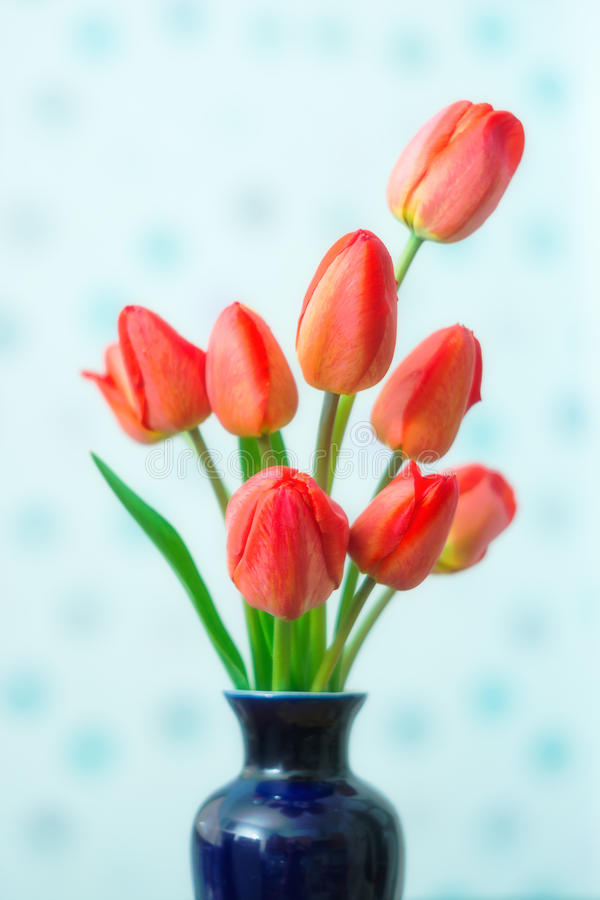 Primavera pueda Tulipanes fotos de archivo libres de regalías