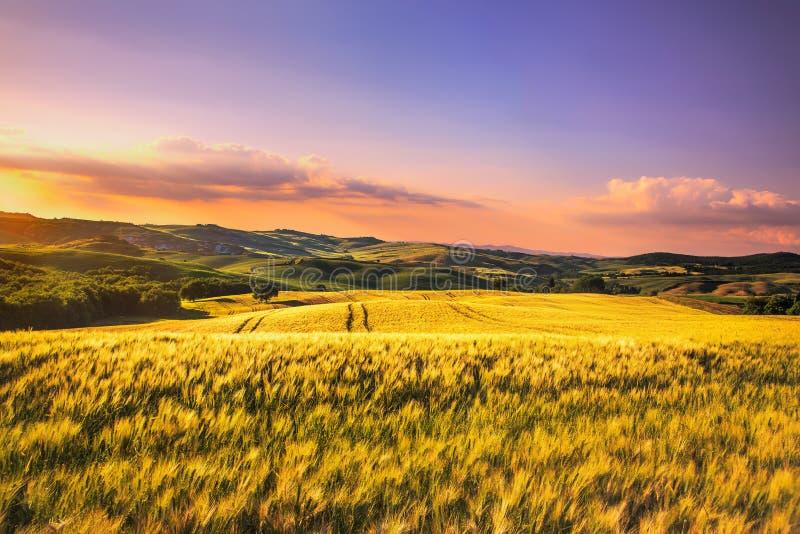 Primavera, Rolling Hills y trigo de Toscana en puesta del sol Siena l rural imagenes de archivo