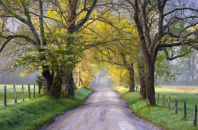 Primavera scenica del paesaggio del parco nazionale di Great Smoky Mountains della baia di Cades immagini stock libere da diritti
