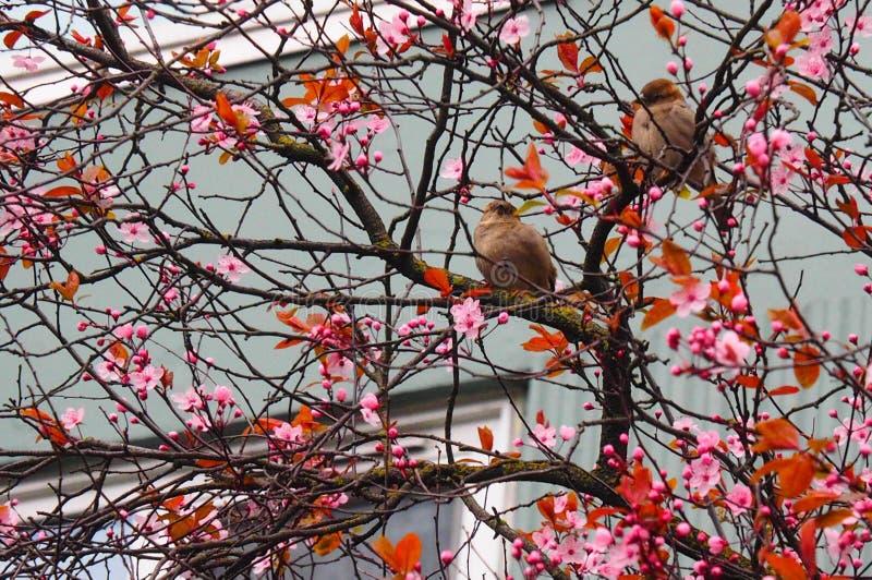Primavera Seattle foto de archivo