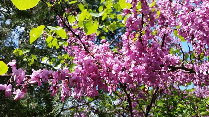 Primavera in Stara Zagora immagine stock