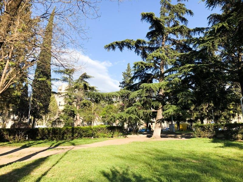 Primavera Sunny Day nel parco della città a Tbilisi, Georgia fotografia stock libera da diritti