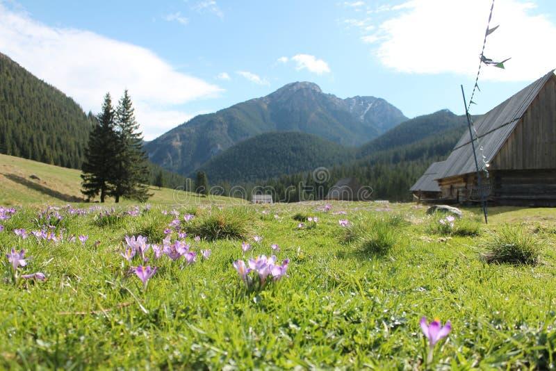 Primavera in Tatras fotografie stock