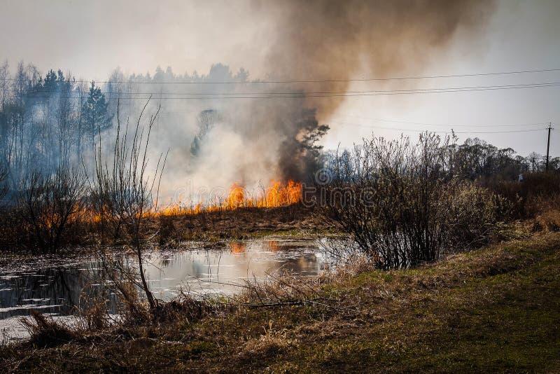 In primavera in tempo asciutto un fuoco nella foresta, in una fiamma ed in forte fumo immagini stock