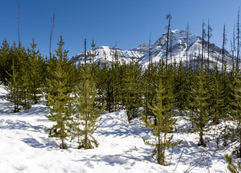 primavera temprana de la escena hivernal magn?fica en la Columbia Brit?nica provincial Canad? del parque del barranco de m?rmol imagenes de archivo
