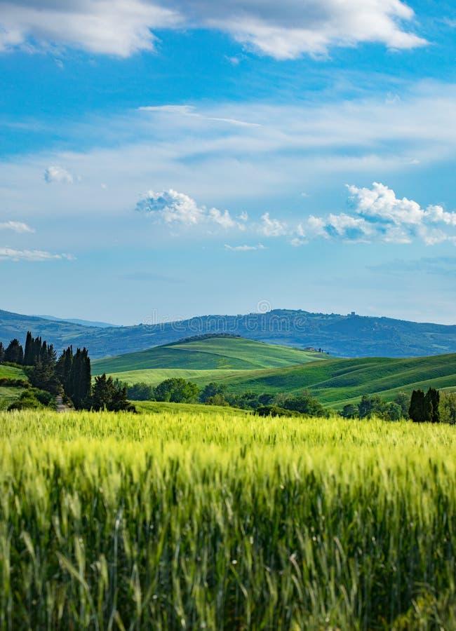 Primavera toscana, colinas onduladas en primavera Paisaje rural Campos verdes y tierras agrícolas Italia, Europa imagenes de archivo