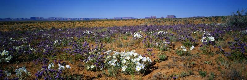 Primavera, valle del monumento, Arizona imagen de archivo