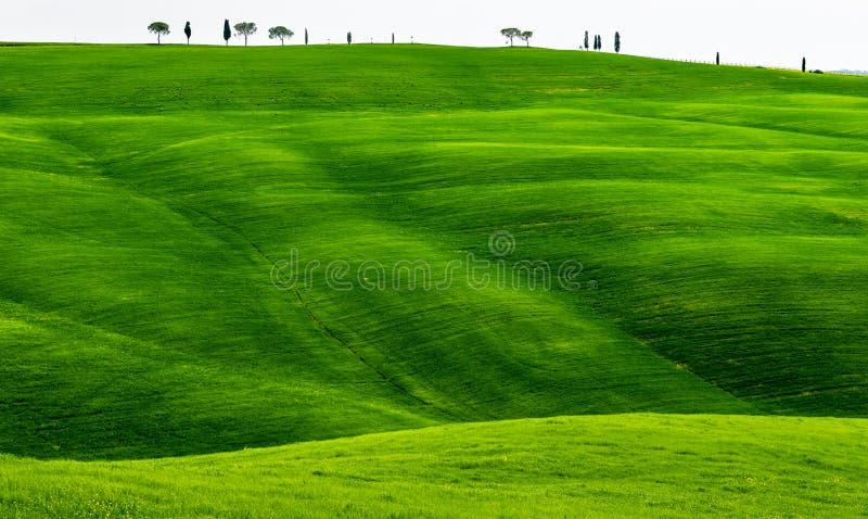 Primavera verde de Rolling Hills en Toscana Italia imagen de archivo