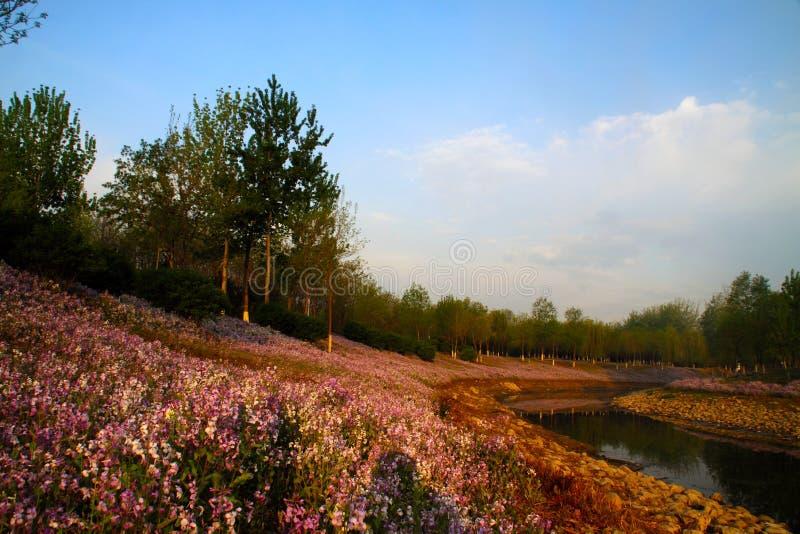 Primavera verde olímpica del humedal del parque de Pekín fotos de archivo
