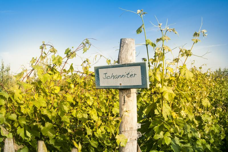 Primavera in wineyard belga immagini stock libere da diritti