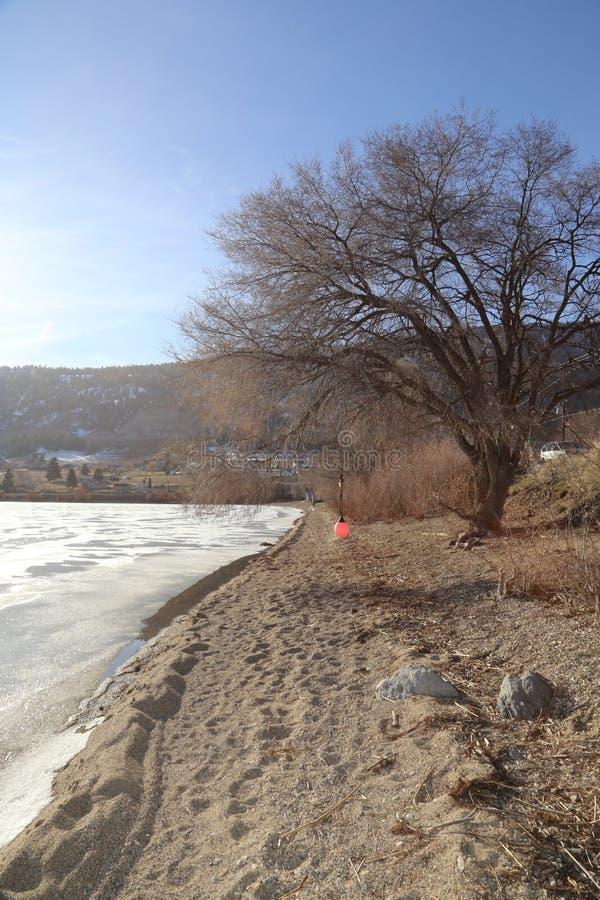 Primavera y árboles vacíos - fondo congelado del lago con un árbol grande en la playa fotografía de archivo