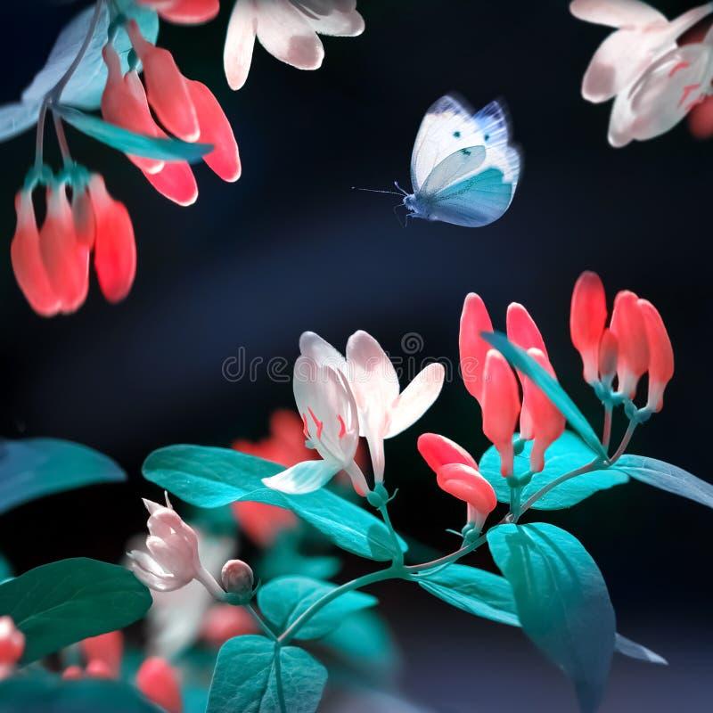 Primavera y fondo natural del verano Flores y mariposa rojas hermosas en el jardín de la primavera Colores verdes, azules y rojos imagenes de archivo
